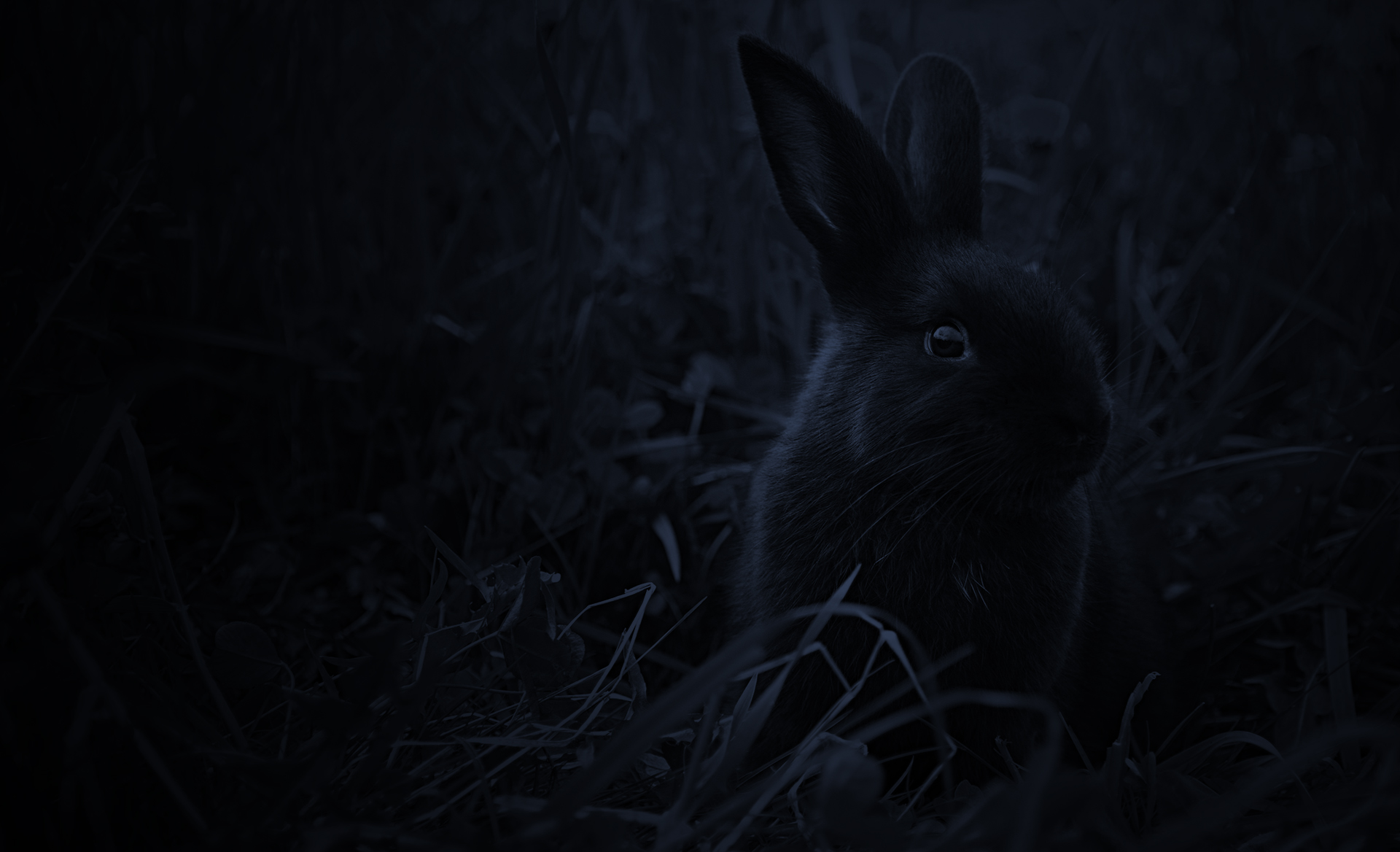 Close-up night shot of little Blossom in the meadow grass of the orchard, ears pricked and alert.