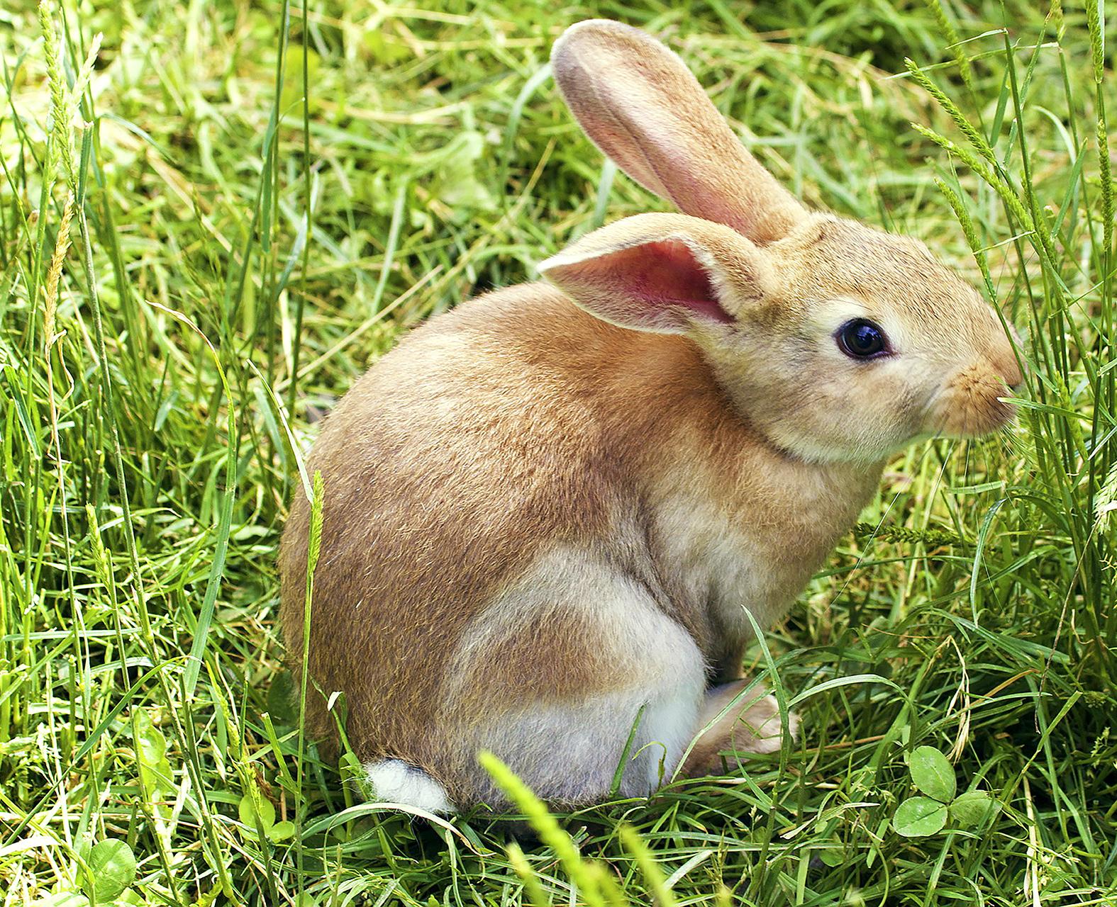 bunny-837443_1920_AGATHA-2019crpd-300-1920