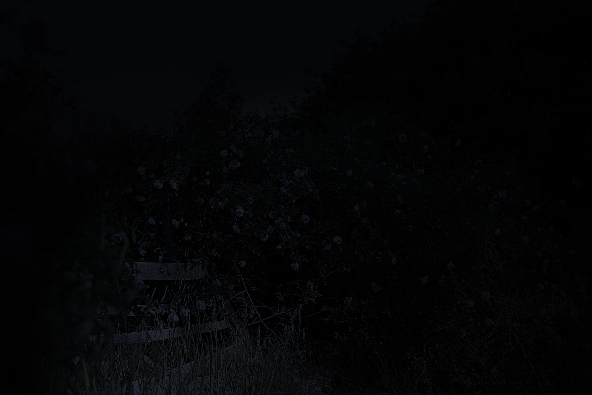 Rose_Gate_Evening_edit_02